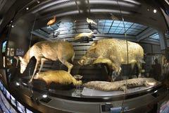 Национальный музей природы и науки, токио Стоковые Фотографии RF