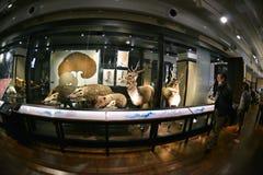 Национальный музей природы и науки, токио Стоковая Фотография