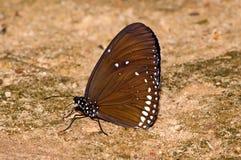 национальный парк бабочки Стоковая Фотография