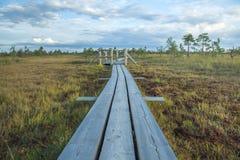 Национальный парк болота в Латвии стоковое фото rf
