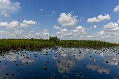 Национальный парк болотистых низменностей - Флорида Стоковое Изображение