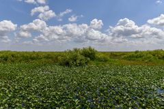 Национальный парк болотистых низменностей - Флорида Стоковые Изображения