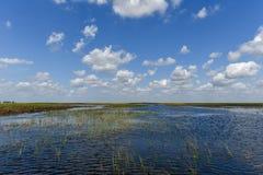 Национальный парк болотистых низменностей - Флорида Стоковое Изображение RF
