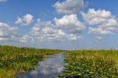 Национальный парк болотистых низменностей - Флорида Стоковая Фотография RF