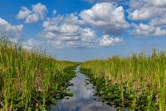 Национальный парк болотистых низменностей - Флорида Стоковые Фотографии RF
