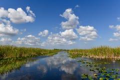 Национальный парк болотистых низменностей - Флорида Стоковые Фото