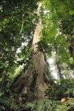 Национальный парк Венесуэла Henri Pittier джунглей пасмурного тропического леса высокий но Стоковые Фотографии RF