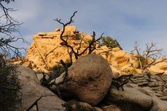 Национальный парк дерева Иешуа в свете вечера Стоковая Фотография RF
