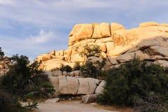 Национальный парк дерева Иешуа в свете вечера Стоковые Фотографии RF
