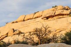 Национальный парк дерева Иешуа в свете вечера Стоковые Фото