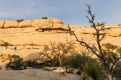 Национальный парк дерева Иешуа в свете вечера Стоковое фото RF