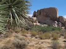 Национальный парк дерева Иешуа, Калифорния Стоковые Изображения RF
