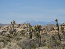 Национальный парк дерева Иешуа - пустыня - юкка - горы со снегом стоковые фото