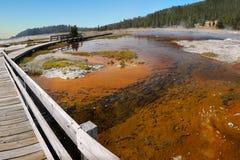 Национальный парк Йеллоустона, Вайоминг, Соединенные Штаты Стоковая Фотография RF