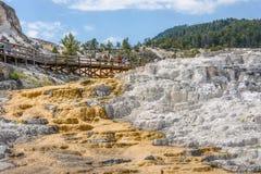 НАЦИОНАЛЬНЫЙ ПАРК ЙЕЛЛОУСТОНА, ВАЙОМИНГ, США - 17-ОЕ ИЮЛЯ 2017: Туристы посещая террасы на Mammoth Hot Springs в соотечественнике Стоковая Фотография