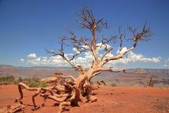 национальный парк каньона грандиозный Стоковая Фотография