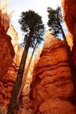 Национальный парк каньона Bryce национальный парк Соединенных Штатов в стране каньона Юты стоковая фотография
