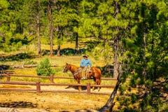 Национальный парк каньона Bryce, Юта США - след лошади 27-ое июля 2016, Соединенные Штаты Стоковое фото RF
