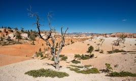 национальный парк каньона bryce Стоковые Изображения