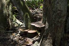 Национальный парк Коста-Рика гриба леса Стоковое Изображение