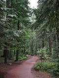 Национальный парк ледника, обматывая путь через деревья стоковое фото rf