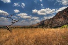 национальный парк Мадагаскара isalo Стоковые Изображения RF