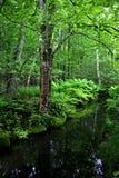 национальный парк Мейна acadia Стоковая Фотография
