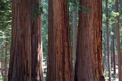 Национальный парк секвойи в США Стоковая Фотография