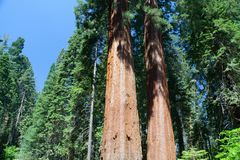 Национальный парк секвойи, США Стоковые Изображения