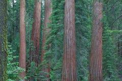Национальный парк секвойи, США Стоковое Изображение RF