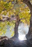 Национальный парк Сиона реки Стоковое фото RF