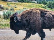 Национальный парк Теодор Rosevelt стоковое фото rf