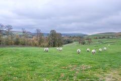 Национальный парк участков земли Йоркшира стоковое изображение