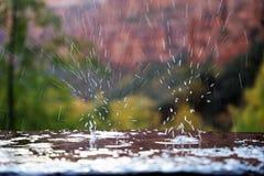 Национальный парк Юта Сион, Соединенные Штаты стоковые фотографии rf