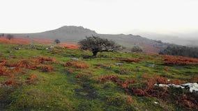 Национальный парк Dartmoor Взгляды осени стоковая фотография
