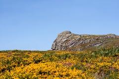 национальный парк dartmoor Стоковая Фотография RF