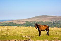 национальный парк dartmoor Стоковое Изображение