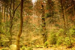 Национальный парк Karkonoski, Szklarska Poreba, Польша Backg леса Стоковые Фото