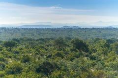 Национальный парк Kruger, Мпумаланга, Южная Африка стоковая фотография
