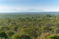 Национальный парк Kruger, Мпумаланга, Южная Африка Стоковое фото RF