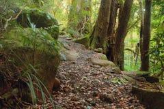 Национальный парк Lamington Стоковые Фото
