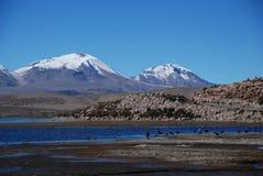 национальный парк lauca Чили Стоковое Изображение RF