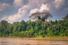 Национальный парк Manu, Перу - 6-ое августа 2017: Ландшафт Ama стоковое фото rf