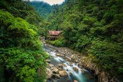 Национальный парк Manu, Перу - 5-ое августа 2017: Ложа джунглей a стоковое изображение rf
