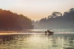 Национальный парк Manu, Перу - 6-ое августа 2017: Семья капибары a стоковая фотография rf