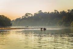 Национальный парк Manu, Перу - 6-ое августа 2017: Семья капибары a стоковые фото
