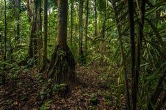 Национальный парк Manu, Перу - 7-ое августа 2017: Национальный парк Manu, стоковые фотографии rf
