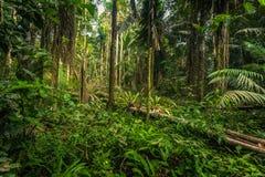 Национальный парк Manu, Перу - 7-ое августа 2017: Rainfores Амазонки стоковые фотографии rf