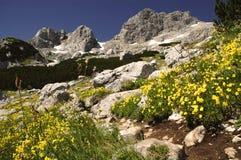 национальный парк montenegro durmitor Стоковые Изображения RF