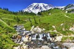 Национальный парк Mount Rainier рая заводи Эдита Wildflowers был Стоковое Фото